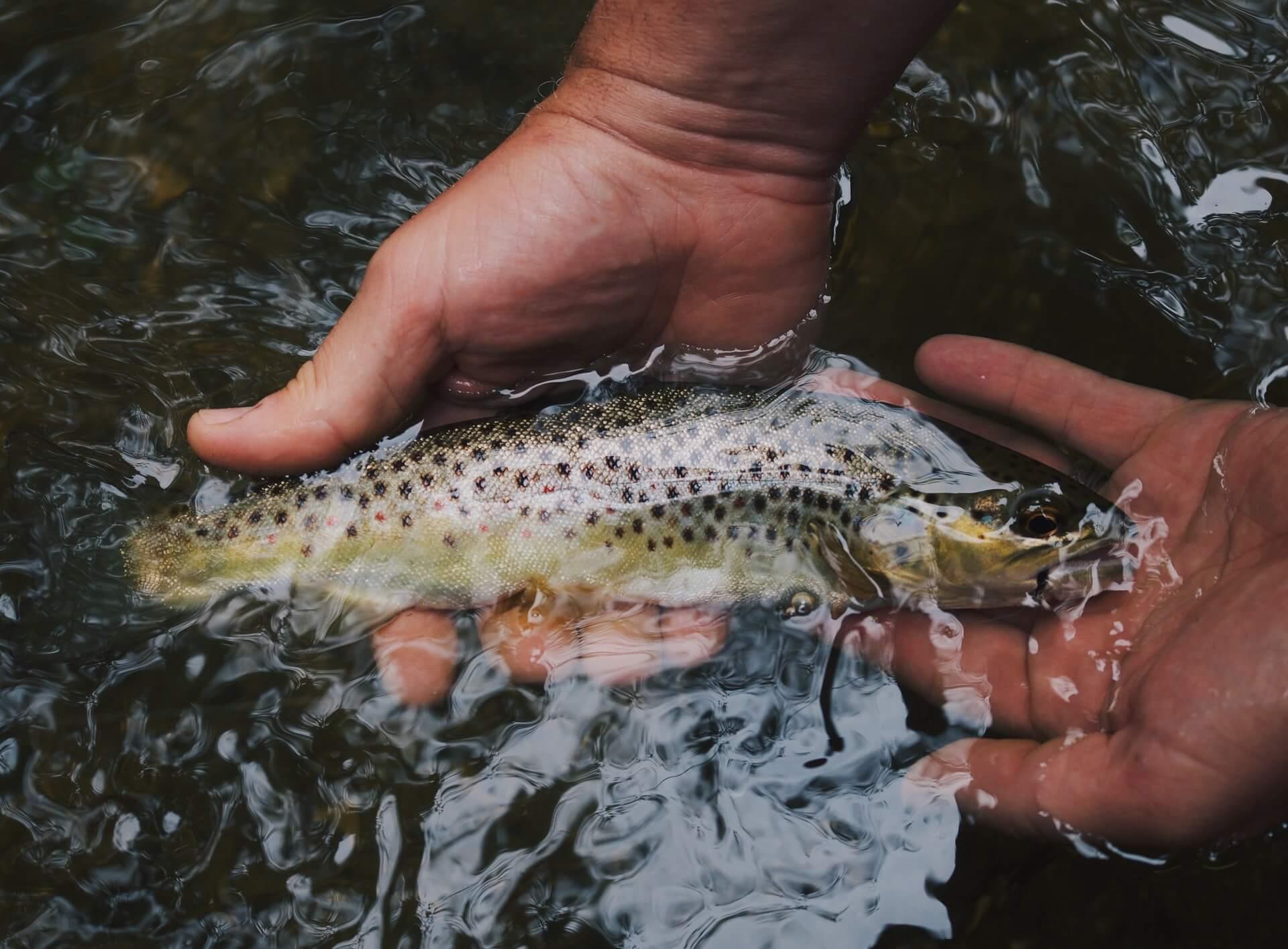 Fiskekort hos inatur